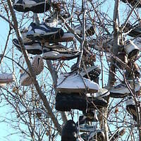Minneapolis Shoetree