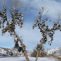 Oregon Shoetree