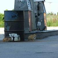 Truckstop Kitties